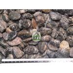 Glitter stone black